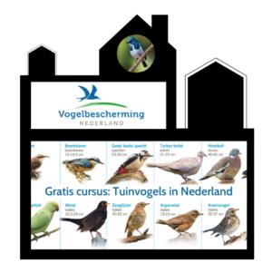 Odigibu: Vogelbescherming Tuinvogels in Nederland